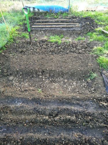 rows of dug over soil