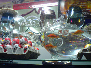 An Iranian shop display closeup of goldfish and eggs