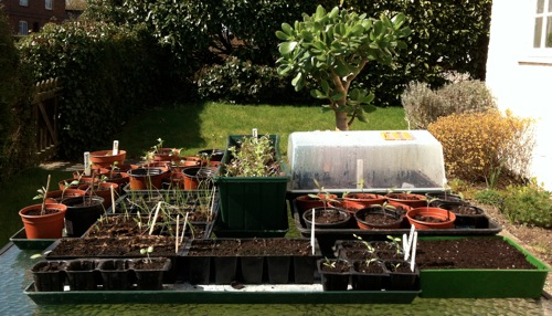 Seedlings in trays on table in garden