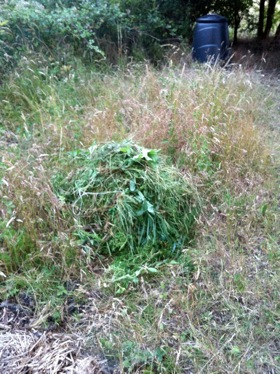 Pile of weeds in long grasses