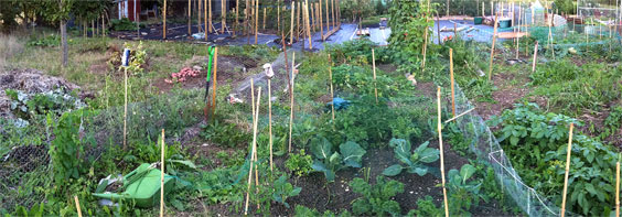 Allotment overview sept 2011 564