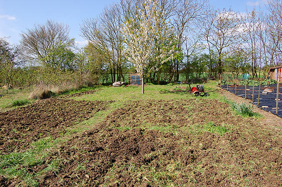 the allotment mid-clearing