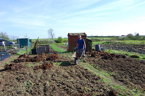 spreading manure over the allotment