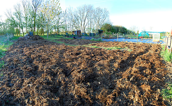 allotment ready for action